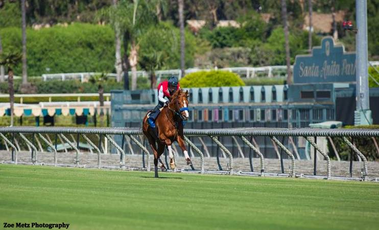 Santa Anita Turf Perfect Before 2016 Breeders Cup