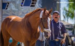 California Chrome arrives at Santa Anita for the Awesome Again Stakes