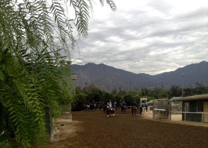 A view from the barn area toward the racetrack gap