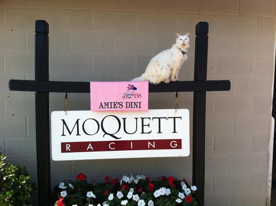 Lucky outside the Moquett barn (Courtesy Ron Moquett)