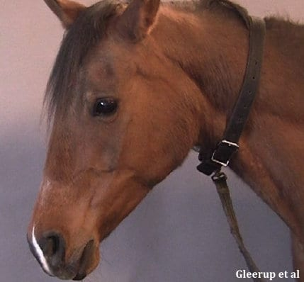 Equine Pain Face Can Help Owners And Veterinarians Spot