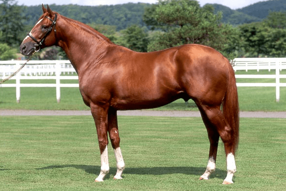Charismatic, as shown in his last JBBA conformation photo