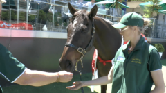 Brew, 2000 Melbourne Cup winner, now 23 years old
