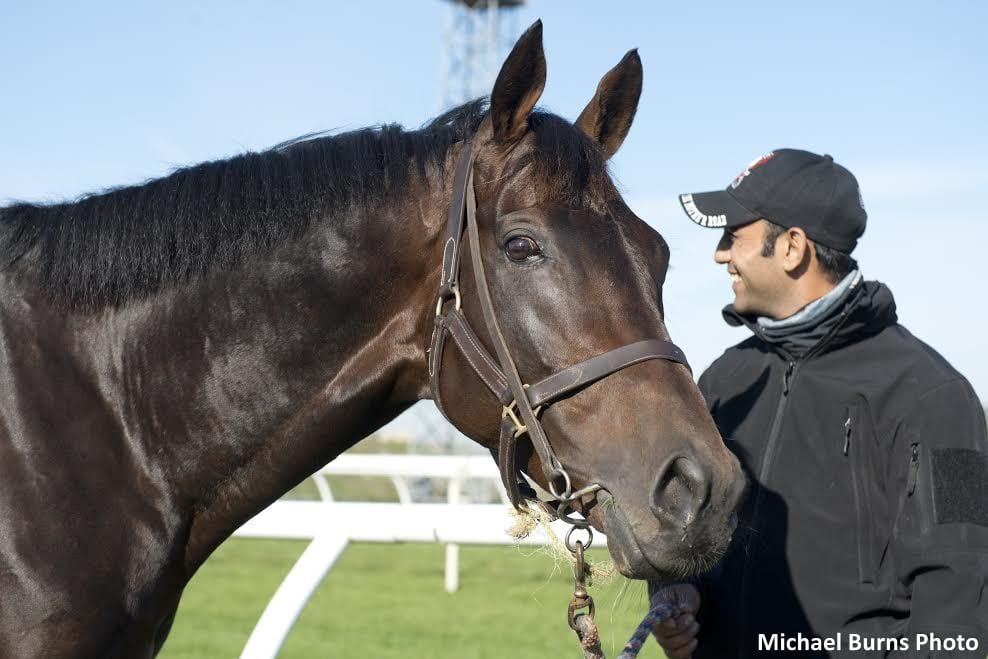 State Farm Report A Claim >> Dartmouth, Protectionist Lead European Contingent Arriving For Canadian International - Horse ...
