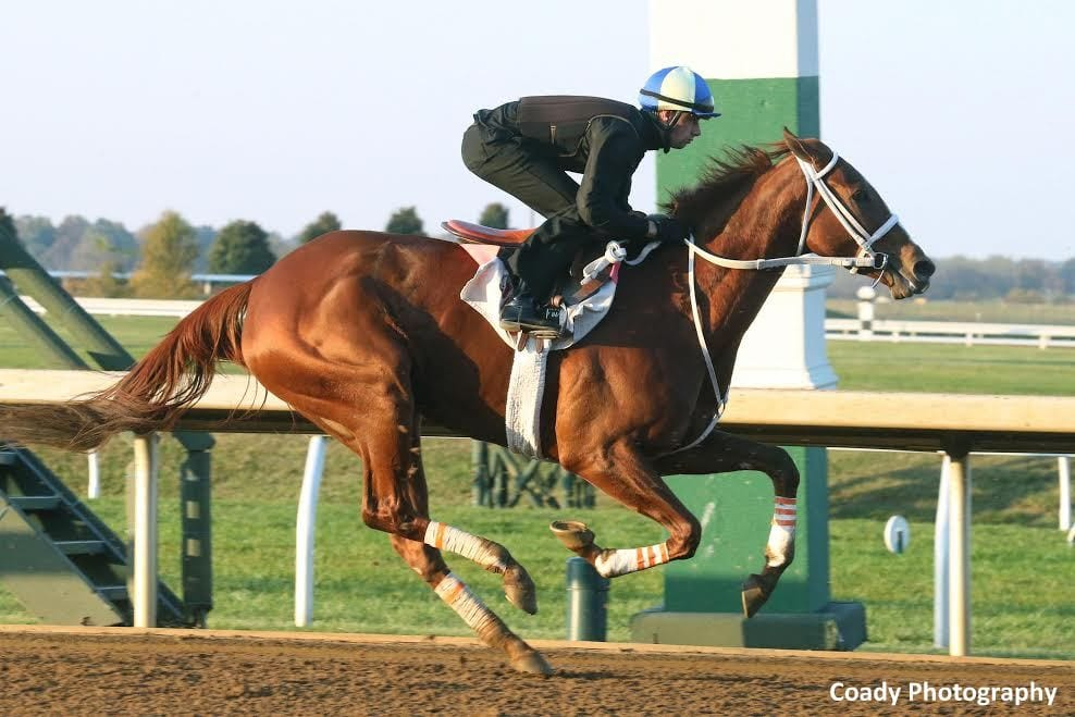 I'm A Chatterbox Retired, Booked To Medaglia D'Oro