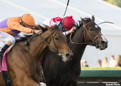 Beholder and Songbird battle to the wire in the Breeders' Cup Distaff