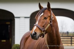 Goldencents at Spendthrift Farm