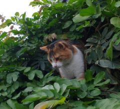 Duane in her tree outside the Hendricks barn