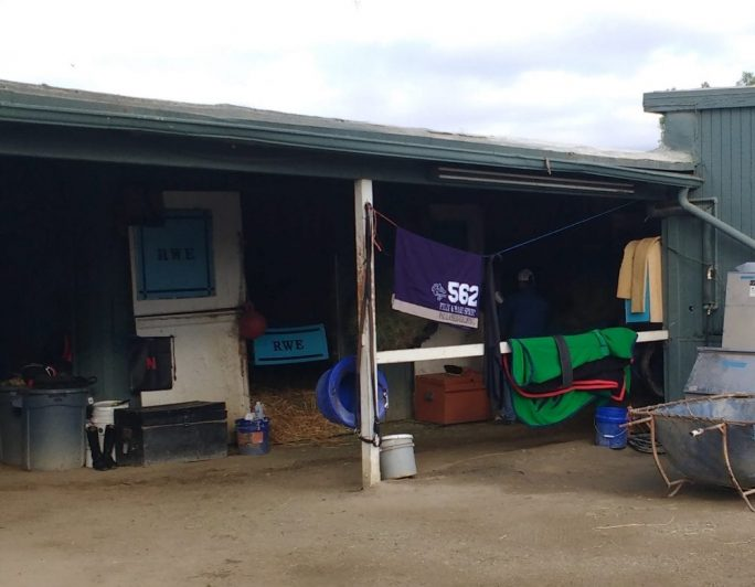 Breeders Cup Photo Blog Presented By Tvg Do Horses Get