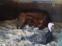 Hercules settles down for an afternoon nap with a friend. Kristin Mulhall Photo