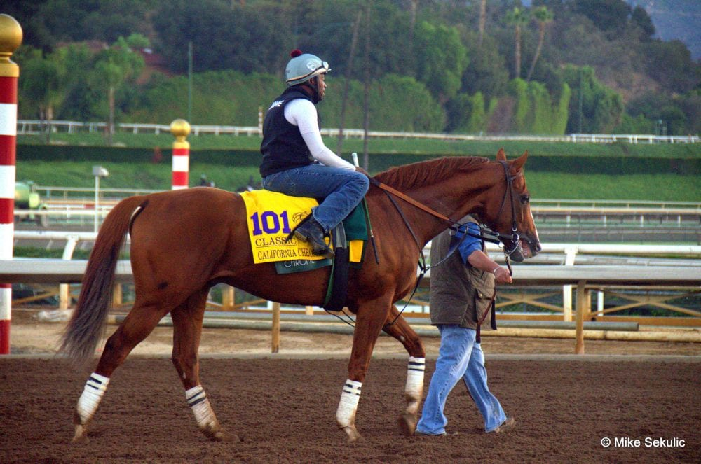 California Chrome at Santa Anita prior to the Breeders' Cup