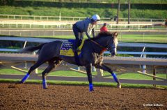 Arrogate will now train up to the Jan. 28 Pegasus World Cup, according to trainer Bob Baffert