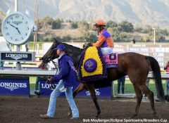 Beholder and Gary Stevens after her Breeders' Cup Distaff victory