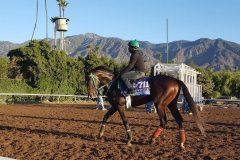 Three Rules leaving the track after training at Santa Anita