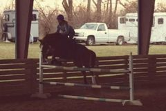 Milord and Heather jumping