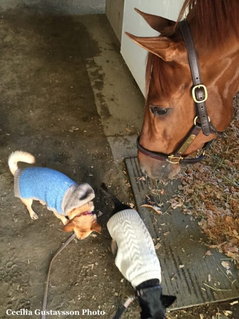 Barney and Banks meet Mind Your Biscuits, who finished third in the Breeders' Cup Sprint