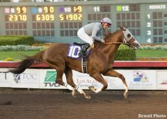 California Chrome wins The Winter Challenge in track record time  at Los Alamitos ©Benoit Photo