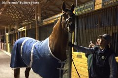 Charismatic arrives at Old Friends Farm in December 2016