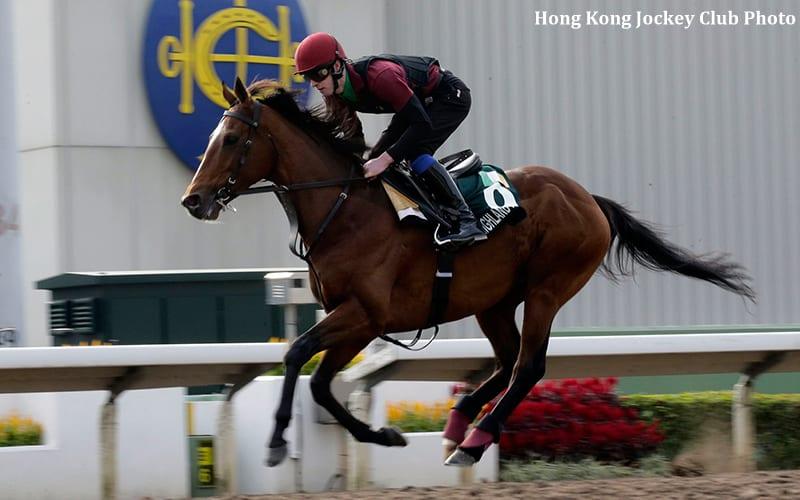 Great Traveler Highland Reel Looks To Repeat In Hong Kong Vase