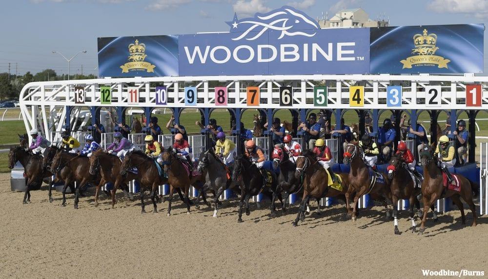 woodbine horse racing