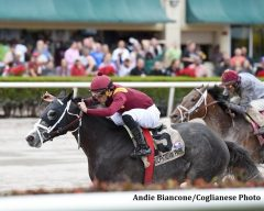 Tapwrit wins the Pulpit Stakes at Gulfstream Park