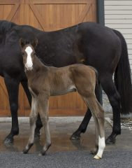 First foal by Fast Anna, a colt out of Unbridled Grace