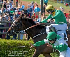 Tod Marks won the 2016 Eclipse Award for Photography for this shot from the Sloane Hurdle at the Iroquois Steeplechase