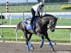 Arrogate takes a morning spin at Gulfstream Jan. 26