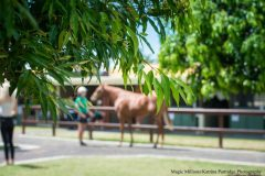 The Magic Millions Gold Coast Yearling Sale is entering its 31st year