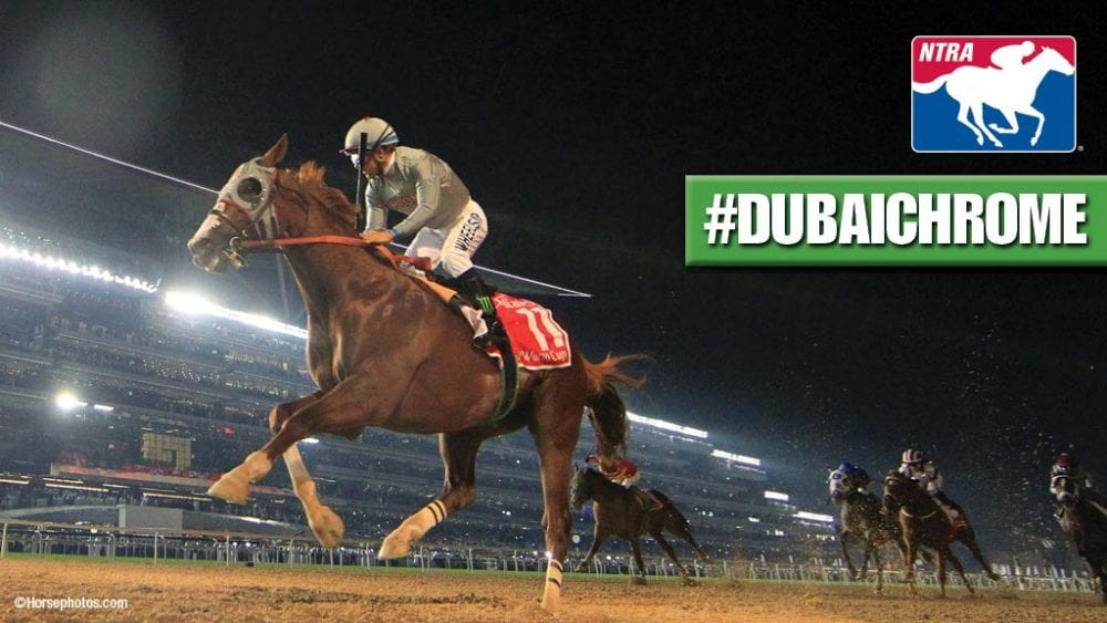 California Chrome's Dubai World Cup Win Named NTRA's 'Moment Of The Year'