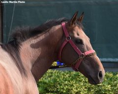 Three-time South American G1 winner Eragon will run in Jim McIngvale's colors in the Pegasus World Cup