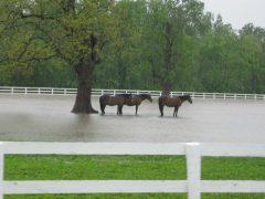 KHP_Flood