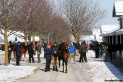 Scenics 2017 Keeneland January Sale