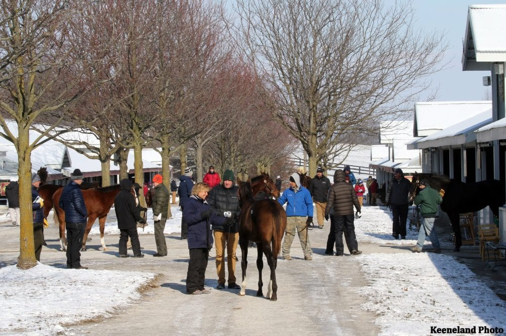 Keeneland Catalogs 1 555 Horses For 2019 January Sale