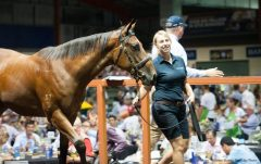 A Fastnet Rock/Dazzling Gazelle filly topped seven figures Saturday