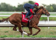 Noble Bird works at Palm Meadows Jan. 15