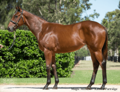 Banke sold this yearling filly by Fastnet Rock to Coolmore at the Magic Millions sale (Magic Millions/Katrina Partridge)