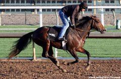 Semper Fortis galloping at Santa Anita (photo courtesy Facebook)