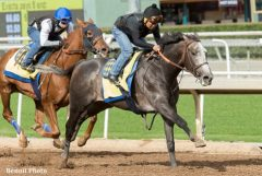 Arrogate breezes at Santa Anita Jan. 15