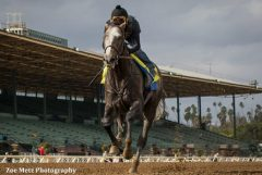 Arrogate breezing at Santa Anita on Jan. 15