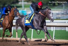Arrogate breezes at Santa Anita on Jan. 8