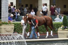 Breaking Lucky schools in the paddock at Gulfstream Park