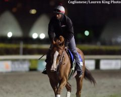 California Chrome jogs a Gulfstream Park