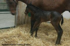 Carpe Diem's first foal is a colt out of Evelyn's Dancer