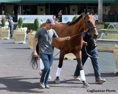 Eragon, a three-time Group 1 winner in Argentina, schooled in Gulfstream's paddock on Jan. 19