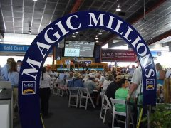 10 of the last 13 winners of the Golden Slipper juvenile race were sold at Magic Millions