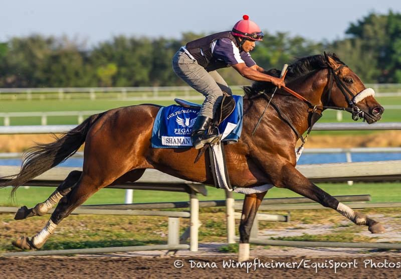 Shaman Ghost 'Willing' In Half-Mile Breeze At Palm Meadows ...