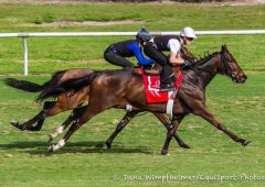 Tepin works at Palm Meadows on Jan. 22