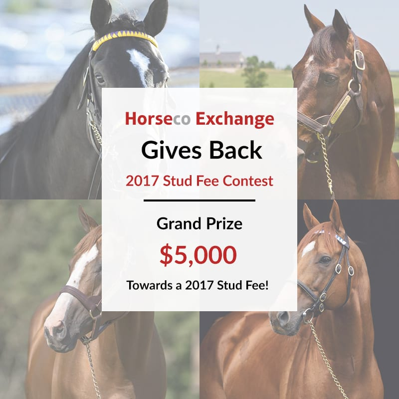 horse racing exchange