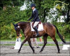 A graduate of The Winter Farm OTTB Rescue and Retirement in his new career.